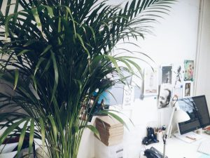 Creative studio plant thunderbolt display